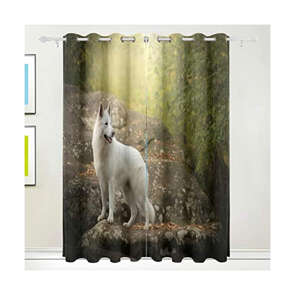 White Swiss Shepherd Dog Looking Back Blackout Curtain Top Insulation Compartment Bedroom Living Room Children's Room 55W x 84L Inches, 2 Panels 1