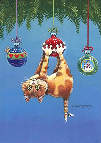 What Now Cat - Box of 18 Funny Christmas Cards
