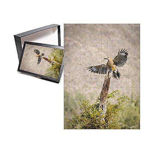 - Media Storehouse 252 Piece Puzzle of USA, Arizona, Buckeye. Male gila Woodpecker Lands on cholla Skeleton (12630155)