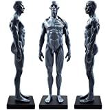 11inch Male Human Body Musculoskeletal Anatomical Model CG Painting Sculpture Teaching Reference Tools (Pu)