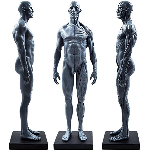 3d Figure Human - 11inch Male Human Body Musculoskeletal Anatomical Model CG Painting Sculpture Teaching Reference Tools (Pu)