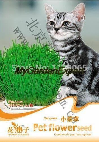 Venta caliente 200pcs Semilla del gato hierba, semilla de flor de mascotas, Bonsai Semilla, Planta de tiesto jardín de DIY: Amazon.es: Jardín