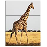 Design Art PT12814-28-36-3P Single Giraffe in Africa Walking - Extra Large African Art Print,,28x36 - 3 Panels