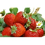 Seedscare Fruit Seeds Strawberry Alpine Fragaria (Pack of 30)