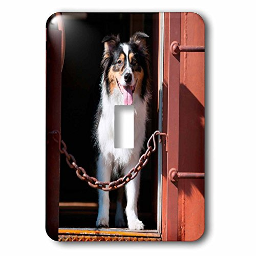 danita-delimont-dogs-australian-shepherd-in-a-train-car-light-switch-covers-single-toggle-switch-lsp