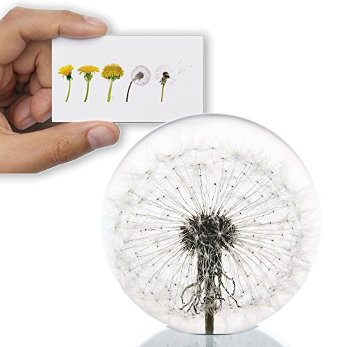 Dandelion Paperweight with Free Card - Made from a real dandelion for Father's Day or Graduation Gift (Graduation Paperweight)