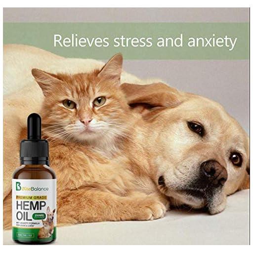 Hemp Oil For Cats, 51Crev9AiVL. SS512