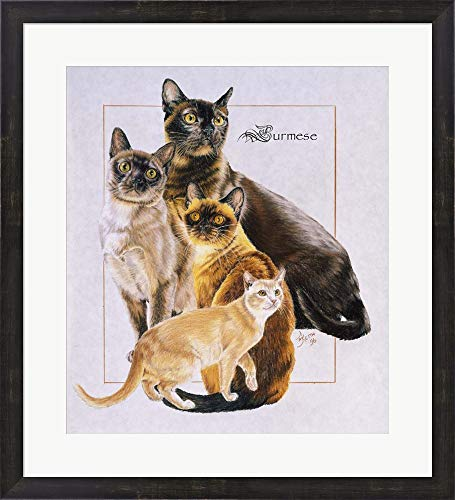 - Burmese by Barbara Keith Framed Art Print Wall Picture, Espresso Brown Frame, 25 x 27 inches