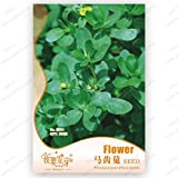 Confezione originale 120 Semi / pack, Portulaca oleracea, semi di portulaca, balcone piante in vaso, semi di piante officinali giardino
