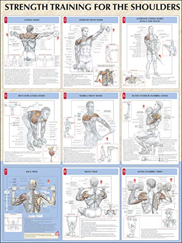 Strength Training Anatomy: Strength Training for the Shoulders Poster - Strength Training Poster Anatomy