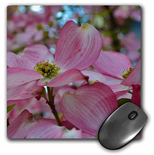 3drose-llc-8-x-8-x-025-inches-mouse-pad-pink-dogwood-flowering-tree-mp-44712-1