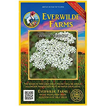 1//4 Lb Common German Chamomile Herb Seeds Everwilde Farms Mylar Seed Packet