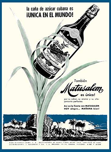 Rum Matusalem - 13