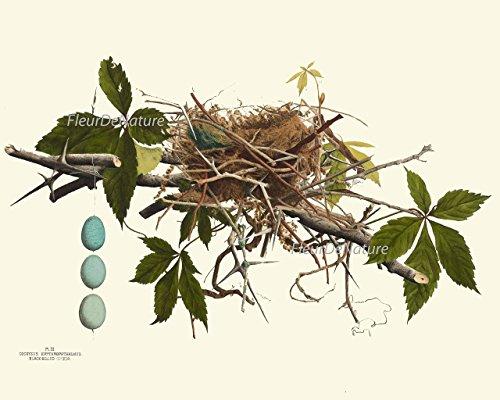 Bird-Nest-Egg-Botanical-Set-of-4-Prints-Unframed-Antique-Beautiful-Tree-Green-Forest-Birdwatcher-Nature-Home-Room-Decor-Wall-Art