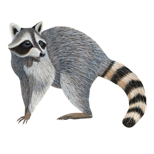 Wild Life Animals Wall Sticker Mural Racoon by Instant Murals
