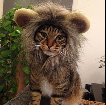Spore (Lion Costume For Small Dogs)