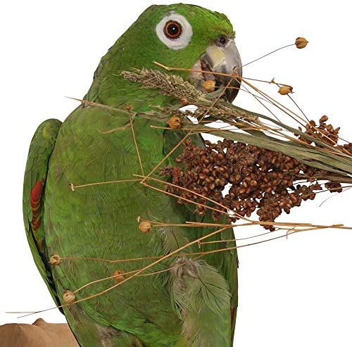 Northern Parrots Rosewood Naturals Bird Pick-n-Fly