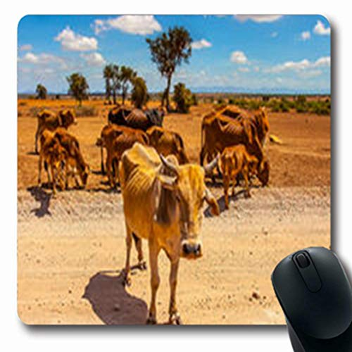 Pandarllin Mousepads Curious Cow Looks Camera Herd Day Cows Walking Wildlife Cattle Nature Oblong Shape 7.9 x 9.5 Inches Oblong Gaming Mouse Pad Non-Slip Rubber Mat