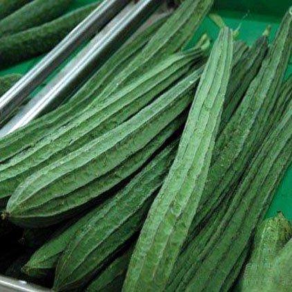 Kushuworld Vegetable Seeds : Ridge Gourd Seeds - Variety Jaipur Long For Terrace Garden in kitchen garden pack (Terrace Gardening Bag)