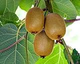 Homegrown Kiwi Seeds, 200, Fuzzy Kiwi