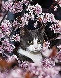 Notebook: Cat domestic cat cat's eyes portrait farm