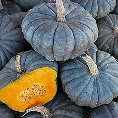 Queensland Blue Squash Seeds (40 Seed Pack) : Garden & Outdoor