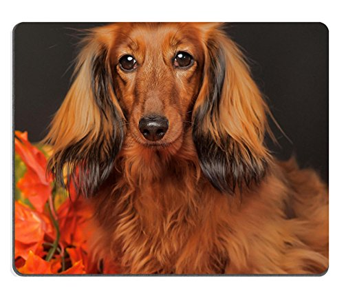 MSD Natural Rubber Mousepad long haired dachshund in the autumn IMAGE 23884274 (Home Made Mouse Costume)