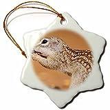 3dRose Danita Delimont - Rodents - Texas, Gatesville, Santa Clara Ranch. Mexican ground squirrel close-up - 3 inch Snowflake Porcelain Ornament (orn_260083_1)