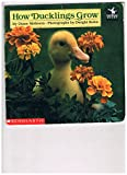 How Ducklings Grow, Diane Molleson, 0590452010