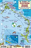 Eleuthera Island Bahamas Dive Map & Reef Creatures Guide Franko Maps Laminated Fish Card