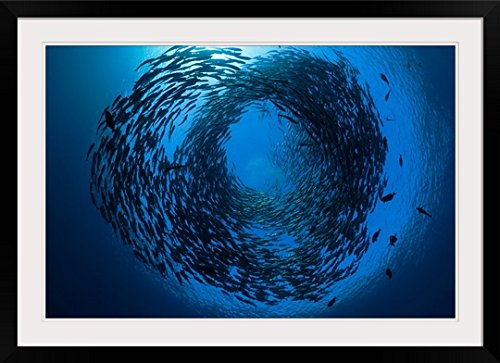 GreatBIGCanvas ''Indonesia, Bali, Tulamben, Schooling bigeye jacks above the Liberty wreck'' by Dave Fleetham Photographic Print with Black Frame, 36'' x 24'' by greatBIGcanvas