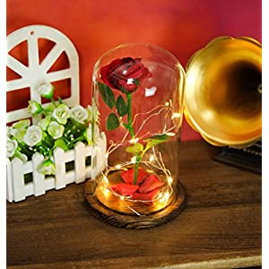 """Beauty and the Beast"" Everlasting Red Rose Flower Led Light with Fallen Petals in a Glass Dome on a Wooden Base 5"
