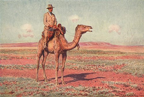 (Surveying for the Transcontinental Railway, Australia. Camels. Percy Spence - 1910 - old print - antique print - vintage print - Australia art prints)