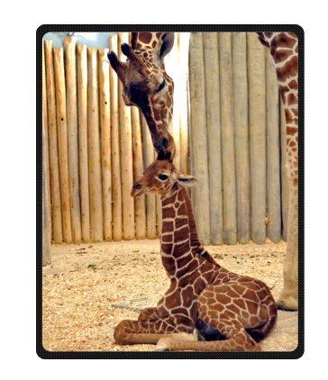 Giraffe Fleece Blanket Cool Cute Throws 40 x 50 inches(Large)]()