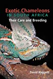 Exotic Chameleons in South Africa: Their Care and Breeding