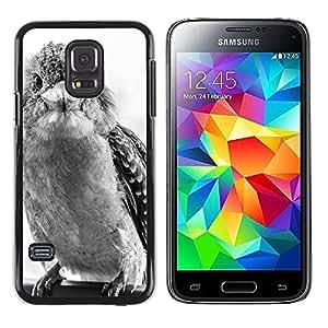 Hot Style Cell Phone PC Hard Case Cover // M00109377 Laughing Kookaburra Kookaburra Bird // Samsung Galaxy S5 MINI SM-G800