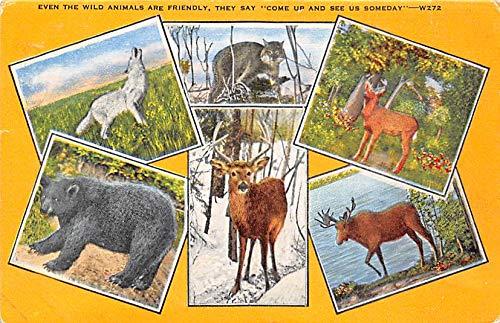Misc Animals Wild Animals 1949