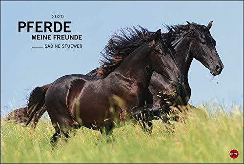 Pferde Meine Freunde. Wandkalender 2020. Monatskalendarium. Spiralbindung. Format 58 X 39 Cm