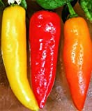 "Hot Hungarian Banana Pepper(4) Live Plants – Not Seeds –Each 3""-6"" Tall- In a 4 Cell Pak"