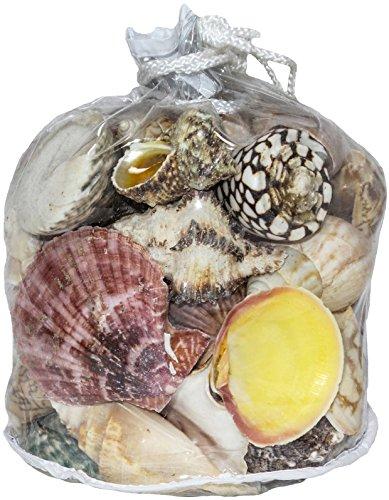 - U.S. Shell, Inc. Large Designer Bag