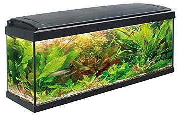 MTB Acuarios Acuario Milo Luxline, Negro, 100 x 30 cm: Amazon.es: Productos para mascotas