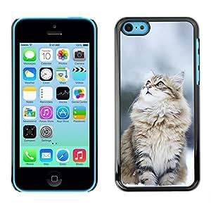 EJOY---Cubierta de la caja de protección la piel dura para el / iPhone 5C / --Gato Nevado