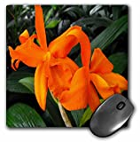 WhiteOak Photography Floral Prints - Cattleya Orchid Orange Orchids - MousePad (mp_22529_1)