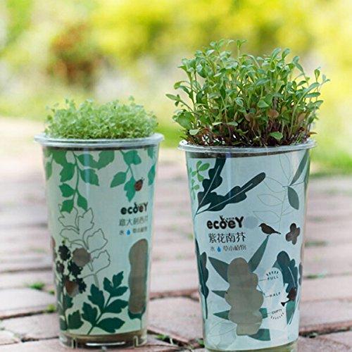 DIY mini de carbono de absorción de cerámica Boll automático Agua Hierba Planta de tiesto de escritorio decoración de la...