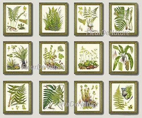 Botanical Set of 12 Prints Unframed Antique Beautiful Ferns Green Forest Nature Home Room Fern Decor Wall Art