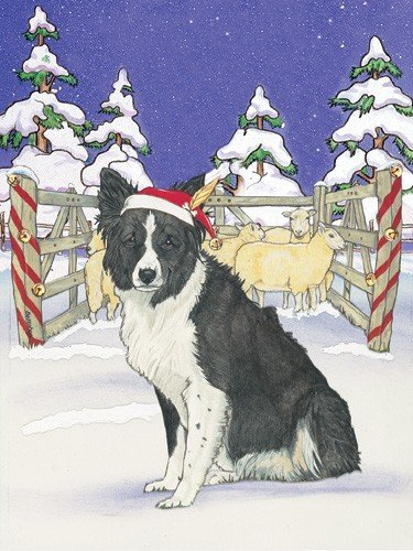 Pipsqueak Productions C935 Holiday Boxed Cards- Border Collie ()