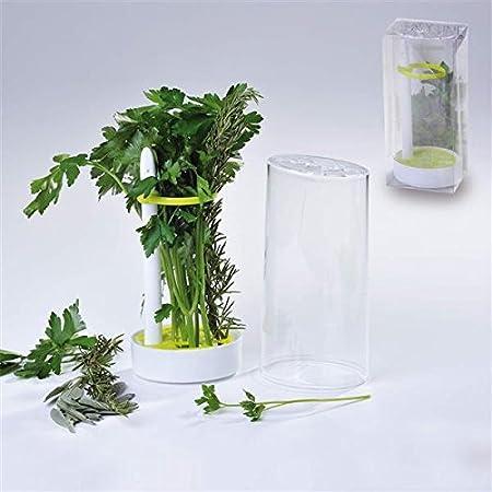 Recipiente para evitar olores en la nevera, para hierbas ...