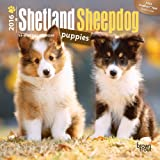 Shetland Sheepdog Puppies 2016 Mini 7X7 (Multilingual Edition)