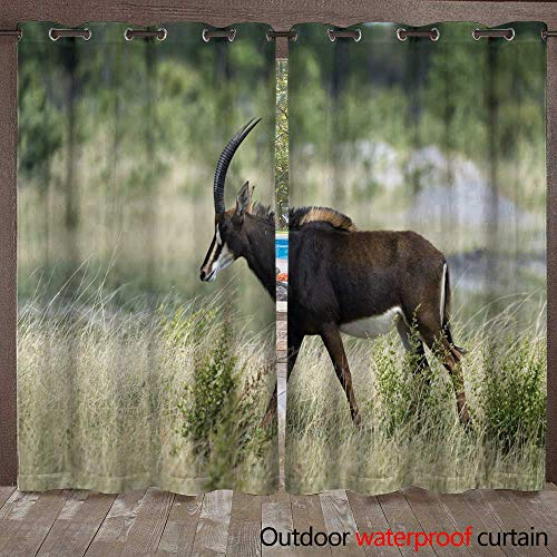 (WinfreyDecor Outdoor Balcony Privacy Curtain Pregnant Female Sable Antelope Walking Right in Hwange National Park Zimbabwe W72 x L84)