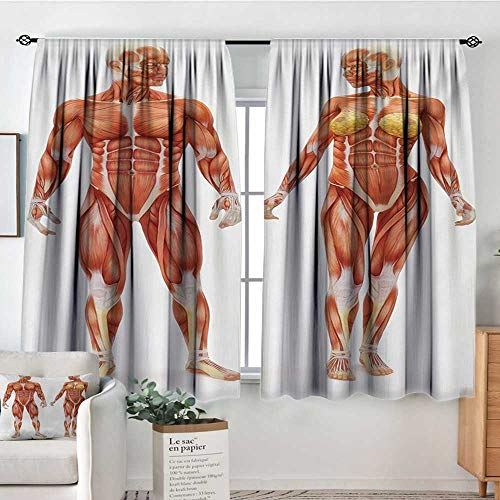 Human Anatomy Room Darkening Curtains Male and Female Bodies with Inner Mass Build Display Muscle System Graphic Print Door Curtain Blackout 72
